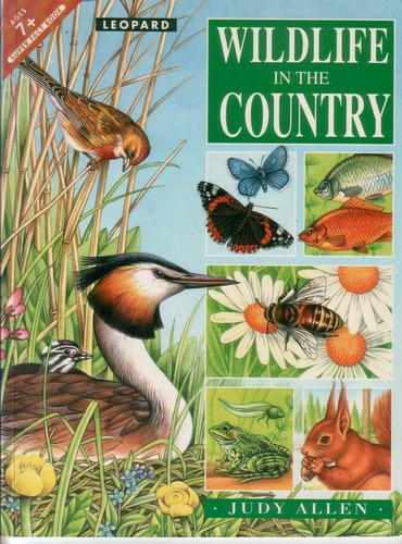 Wildlife In the Country by Judy Allen