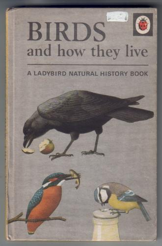 Birds and how they live