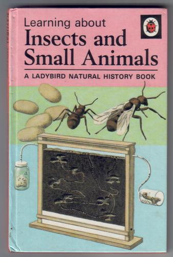 Learning about Insects and Small Animals